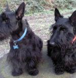 Pip & Bertie